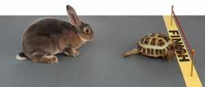 tortoise-and-the-hare2